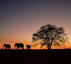 象と夕暮れ