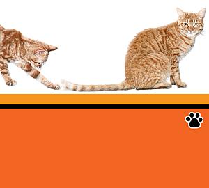 猫とシッポ
