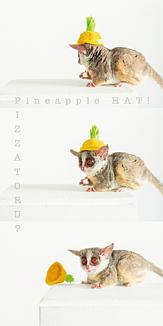PIZZATORU/ピザトル [パイナップル帽子]