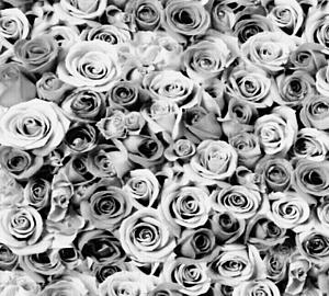mono-rose