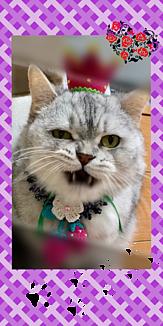イチゴ王子猫~Purple~