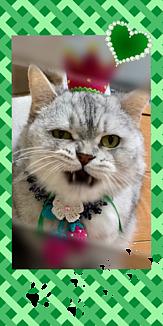 イチゴ王子猫~Green~
