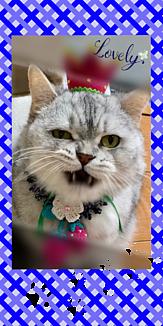 イチゴ王子猫~Blue~