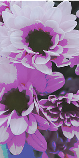 独特な紫の花