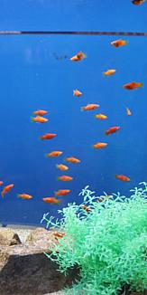 水槽の中の小さな魚