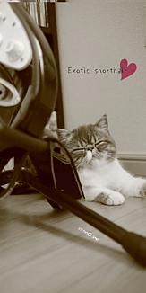 エキゾ猫chimaki⑥