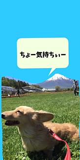犬と富士山