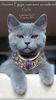 高貴なキャット ネコ ねこ サファイア