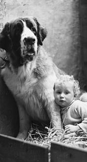 セントバーナードと赤ちゃん