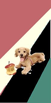 ダックスのゆっちゃん りんご大好き シックなカラーバージョン