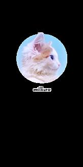 milkuro「猫の横顔/写真」透明ケース