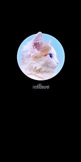 milkuro「猫の横顔/写真」ケース black