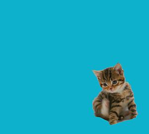 cat ブルージーン