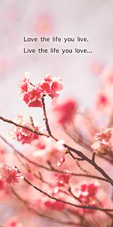 八重桜メッセージケース