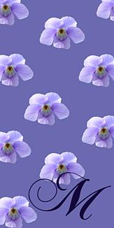 Spring -M