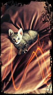 CAT concerto