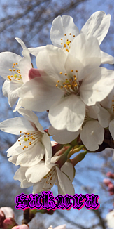 日本の四季(4010)