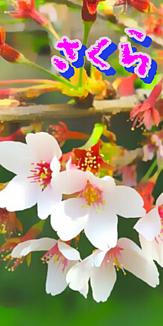 日本の四季(4008)