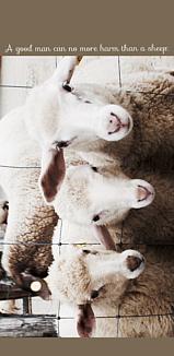 3*sheeps