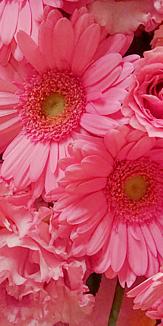 フラワー(ピンク)