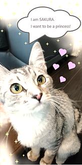 Princess_猫