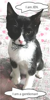 Gentleman_猫