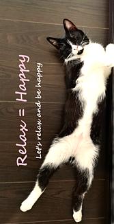 Relax=Happy_猫