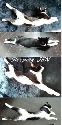 Sleeping JEN_猫