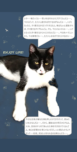ENJOY LIFE!_猫