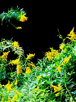 黒色の世界に咲く花(黄色と緑の植物)