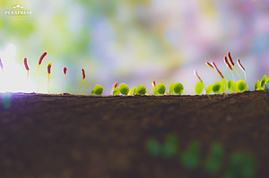 小さなせかい(癒しの木と植物)