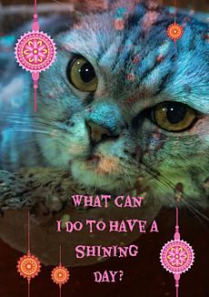 魔法使いの猫
