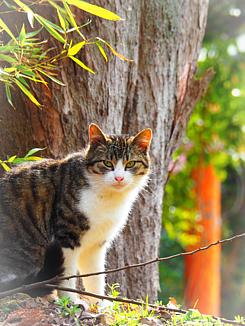 野良猫タイム(森と猫)
