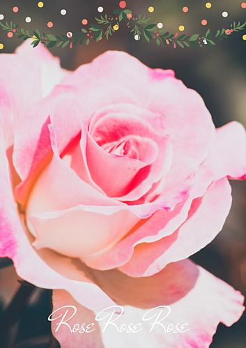 バラのかおり(ピンクの花)