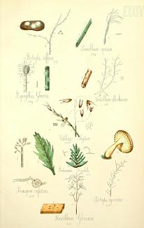 アンティークのキノコ標本6