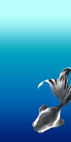 金魚-BLACK