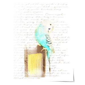 Bird Classic2