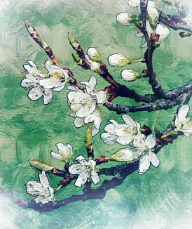桜 油絵風 花