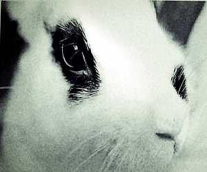 パンダウサギ