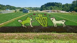 田んぼアート④