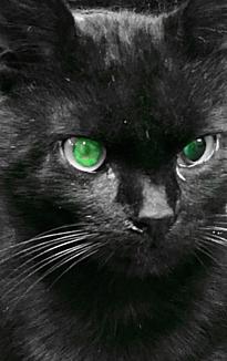 緑色の目の黒猫