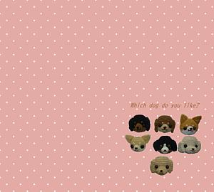 Which dog do you like?