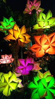❁輝く花々❁