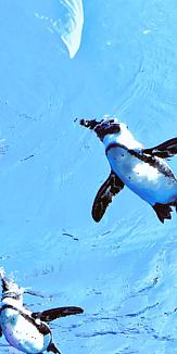 すいすいペンギン