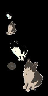 白黒猫 透明バージョン4