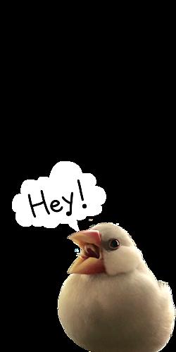 呼びかけ文鳥