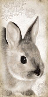ネザーランドドワーフ - 色鉛筆画