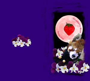 レッサーパンダと月