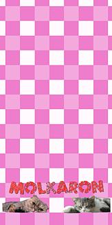 市松模様 ダル猫 ピンク