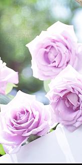 紫の薔薇 輝けるあなた